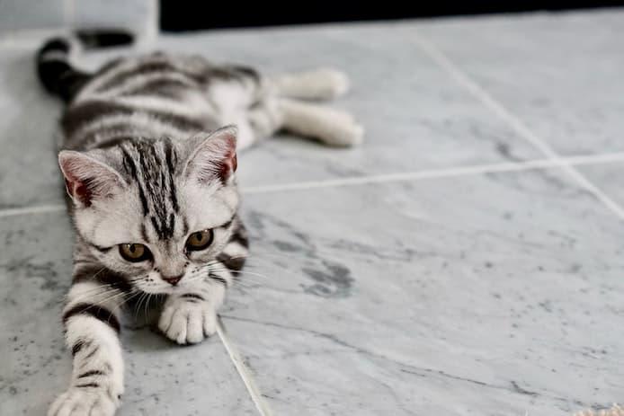 Cats Blender Pluginのインストール【他の必要ツールも一気に準備】